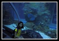 Dubai Aquarium Tube