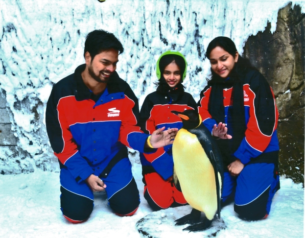 Penguin Encounter @ SKi Dubai. Photo courtesy: Ski Dubai Photographer.